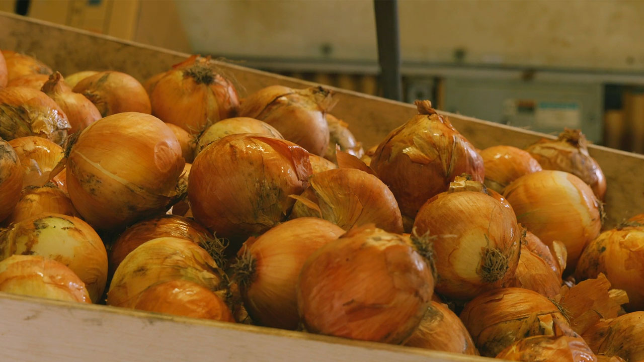 楽天ふるさと納税が岡山県笠岡市の玉ねぎを救う!